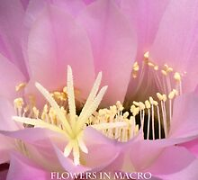 Flowers in Macro by Marilyn Harris Photography by Marilyn Harris