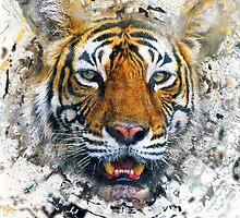Bengal tiger by leksele