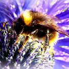 Bumblebee on Thistle by ©The Creative  Minds