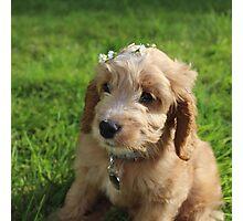 Flower Crown Puppy Photographic Print