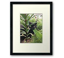 Kitty in the Garden Framed Print