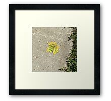 First of fall Framed Print