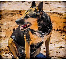 Old Dog Photographic Print