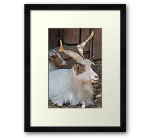 moose at the zoo Framed Print
