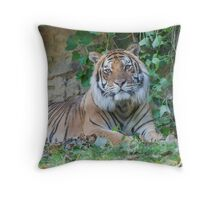 tiger at the zoo Throw Pillow
