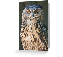 owl in the mountains Greeting Card