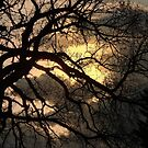 Sunset Branches by kenspics