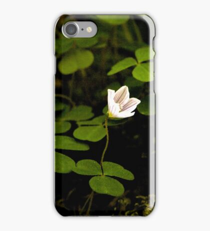 Wood Sorrel, Ness Woods, County Derry iPhone Case/Skin