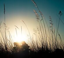 Sunset through the reeds by maddie5