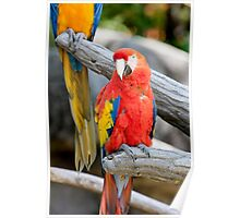 parrot on its perch Poster