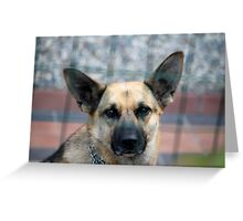 tiny terrier dog Greeting Card