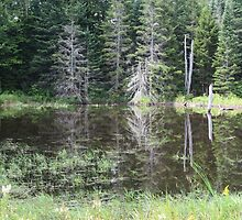 beaver pond in Vermont by grichuate