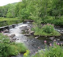 pond, flowers and dam in Vermont by grichuate
