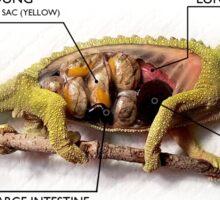 Jackson's Chameleon Anatomy with Labels Sticker