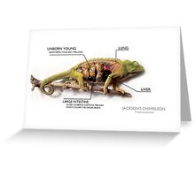 Jackson's Chameleon Anatomy with Labels Greeting Card