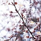 Hill blossoms by Kell Jeater