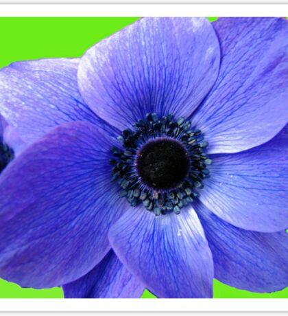 Blue Anemone on Green Background Sticker