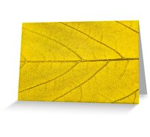 Leaf abstract texture  Greeting Card