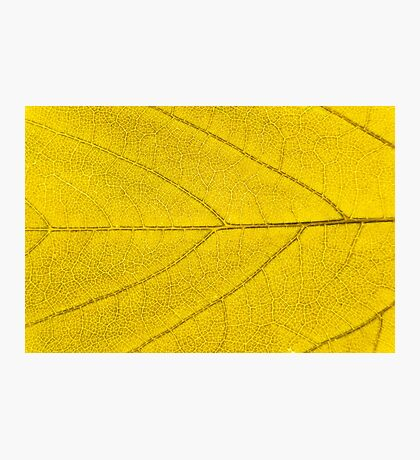 Leaf abstract texture  Photographic Print