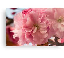 pink flowers on the trees Metal Print
