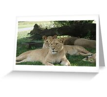 Restful Lioness Greeting Card