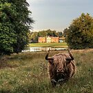 Highland Cow at Avington Park, Hampshire by NeilAlderney
