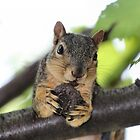 You come any closer and I'll throw my nut at you... by Keala