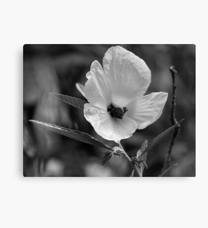 Coastal Beauty (black and white)  Canvas Print