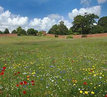An expansive wildflower meadow in full bloom, a mirage of colour  by miradorpictures