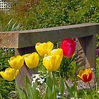 How Does Your Garden Grow? by ShutterBuggz