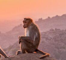 Hampi temple monkeys, India Sticker