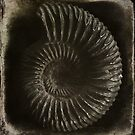 Ammonite by Andy Duffus