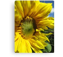 Sunflower Of The Year Canvas Print