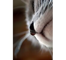 By A Nose © Photographic Print