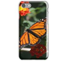 Monarch Butterfly after Nectar iPhone Case/Skin