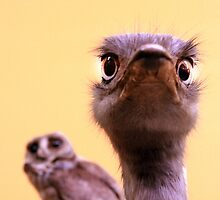 Curious Ostrich and Owl Cute Fun Photograph by ARTificiaLondon