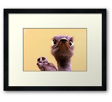 Curious Ostrich and Owl Cute Fun Photograph Framed Print