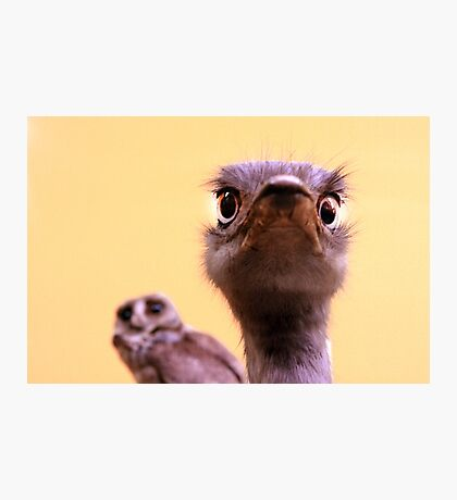 Curious Ostrich and Owl Cute Fun Photograph Photographic Print