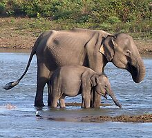 Mother and baby elephant by Rachelh112896