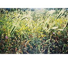 Green Spring Meadow Shot on Porta 400 Film Photographic Print