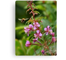 Bumble bee on a mission Canvas Print