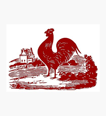 Red Rooster in Farmyard Photographic Print