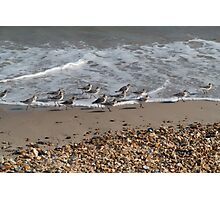 Birds in the waves Photographic Print