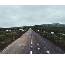 Sheep Crossing Countryside Road at Dawn Photographic Print