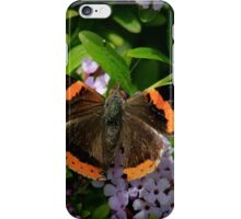 Red Admiral's Display iPhone Case/Skin