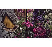Birdhouse Flowers Photographic Print
