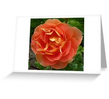 Peachy coloured rose Greeting Card