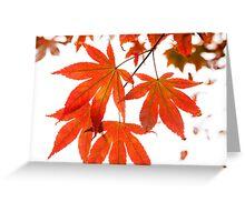 Orange Leaves of Japanese Maple Tree Greeting Card