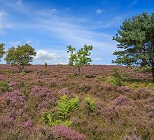 Dunwich Heath by Nicholas Jermy