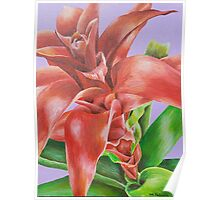 Bromeliad Flower Acrylic Painting Poster